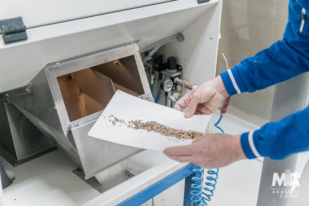 Pulitura grano - Molino Agostini
